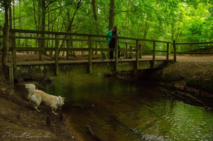Forest_Lueneburg_11072015-15