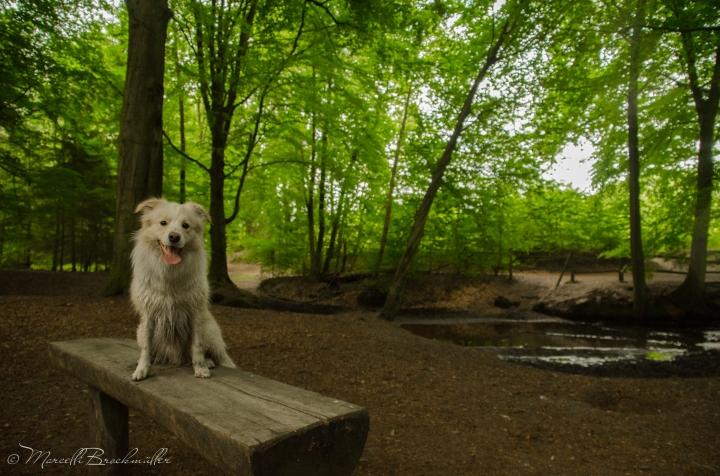 Forest_Lueneburg_11072015-17