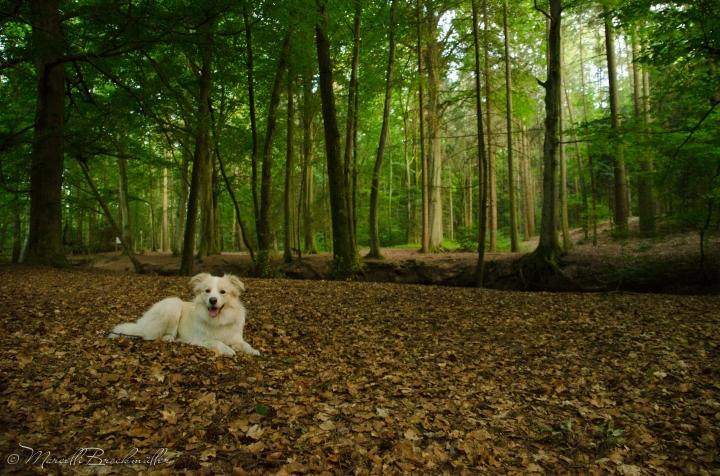 Forest_Lueneburg_11072015-29